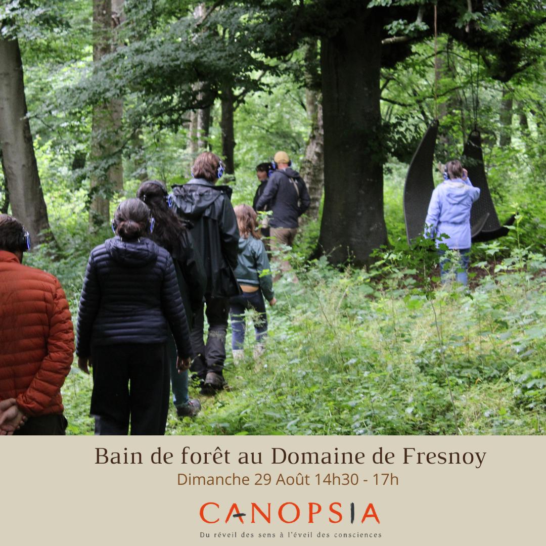 Bain de forêt au Domaine de Fresnoy